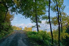 20161023-123623 (Ernst_P.) Tags: aut baum berg herbst hof hohemunde inzing pflanze schfftal tirol wald weg sterreich tyrol austria autriche bosque forest autumn ontoo