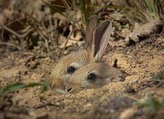 4/3 made (Altreize2) Tags: omd em1 lapins rabbits bej