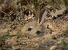 µ 4/3 made (Altreize2) Tags: omd em1 lapins rabbits bej