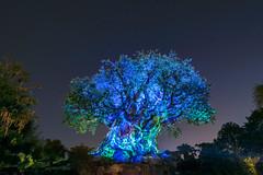 The Tree of Life After Dark (MattStemerman) Tags: d750 disneyworld waltdisneyworld dak animalkingdom disney wdw treeoflife nikon