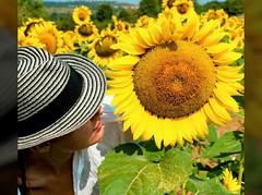 People are people (Serivanov22) Tags: movielike movement slideshow summertime summer nikond90 nikon olympusomdem10 olympus omd em10 microfourthirds micro43 ladies beauties beauty sunflower heat green bluesky