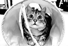 Sirius (fedenew1983) Tags: animal cat giocare gatto blackandwhite sirius