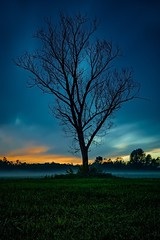 End of the day! (Riccardo Codognotto) Tags: fog drammatic italy veneto clouds sky outdoor longexposition tree sunset