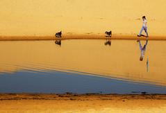 Walking (LSydney) Tags: samd reflection dogs walking curlcurl