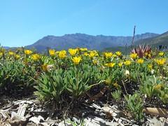 Farm Visit (SoulRiser) Tags: nature plants flowers