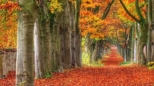 November carpet