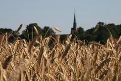 20130720_IMG_0105 (anriro96) Tags: elements heemsen nienburg feld ernte gras getreide blau blue sky rohrsen weser sun summer