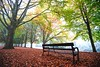 Perfection take two... (Paul C Stokes) Tags: clifton parade bristol uk autumn leaves brown avenue trees carpetofleaves sony sonya7r a7r zeiss zeiss1635 1635 fog foggy mist misty morning conditions light green filterd plant tree outdoor serene landscape forest