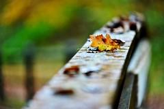 autunno (Riboli Alessandro) Tags: autunno colori colors leaf autumn natura flora nikon nikkkor tamron 70200 28 foglia