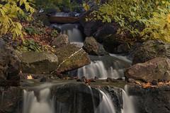 Upstream (aerojad) Tags: chicago chicagobotanicgarden fall autumn fallcolors colorful flora leaves leaf waterfall longexposure daytimelongexposure stream water landscape outdoors
