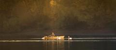 Fisherman in late light (hardy-gjK) Tags: lake see etang water boot eau wasser refection spiegelung fisher light dunst fog brume haze lac landscape paysage swan schwan gnse goose cygne oie