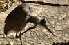 Heron, Morton Arboretum. 1 (EOS) (Mega-Magpie) Tags: canon eos 60d nature wildlife outdoors bird heron the morton arboretum lisle dupage il illinois usa america
