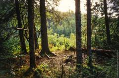 1997 Ural Mountains (Alexander Kondakov) Tags: 1997 kodak kodakektachromee100vs landscape lens perm photobyalexanderkondakov russia ural uralmountains film minolta700si minoltaaf2885mmf3545 minoltaaf75300mmf4556 old