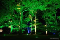 DSC04085 (Twareg) Tags: 2016 aboretum bpw enchanted forest westonbirt bathphotowalk gloucestershire england handheld night nightshot