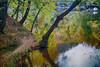 YEDİGÖLLER (COSKUNTUNA ... 1.999.000 ... THANK YOU) Tags: coskuntuna 2016 eralpege 3e eos70d canon70d canon life love live lake last nature natura beauty beautiful bravo blue yedigöller yedigoller turkey türkiye travel tree