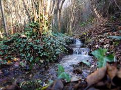 IMG_6785-1 (Photopedaler) Tags: woodlandstream streams ruralscenes