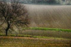 L'uomo è come un albero e in ogni suo inverno attende la primavera  che reca nuove foglie e nuovo vigore (Gianni Armano) Tags: luomo è come un albero inverno attende primavera reca nuove foglie vigore foto gianni armano photo flickr