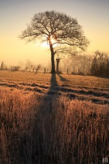 Instant Hivernal (NeoNature) Tags: canon nature france calvados suissenormande normandie normany sunrise lever soleil tree frozen gele winter hiver mist fog brume brouillard field champs campagne countryside