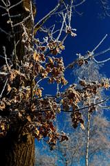 IMG_0844_DxO Frost (Wallus2010) Tags: frost raureif eis winter sonnenschein himmel blue sky canon polfilter polarizer eos550d sigma 18250 polarizing frozen