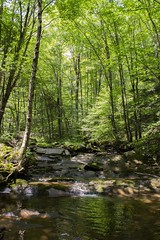 Stream (Devin Boggs) Tags: nature woods trees hiking clouds streams