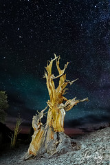 Wanted~Dead or Alive (jeandayphotography.com) Tags: california ca old trees usa mountains color stone night clouds forest stars landscape dead ancient branches whitemountains aged bristlecone bigpine inyonationalforest bristleconepineforest easternsierranevada ancientbristleconepineforest jeanday wwwjeandayphotographycom
