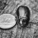 Beetle and Dime  BW RedRock _2015_08_08_17-33-29_DSC_4629_©LindsayBerger2015