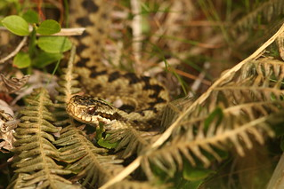 Sunday Morning Snake