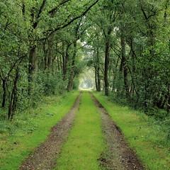 Way through (mbridgener) Tags: woods forrest natur wald heimat schleswigholstein duvenstedterbrook