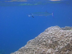 Big Lagoon snorkelling (www.JnyAroundTheWorld.com - Pictures & Travels) Tags: philippines palawan elnido bacuitarchipelago bacuitislands miniloc island snorkelling biglagoon underwater coral reef canon jnyaroundtheworld jenniferlavoura