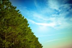 Green Line (J.J.Evan) Tags: wood trees sky clouds pines