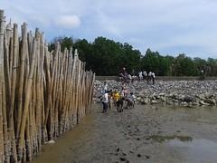 10.12.2015-AngloSingapore-BangPu-100 trees (6) (pattfoundation2014) Tags: thailand education mangrove treeplanting bangpu pattfoundation anglosingapore