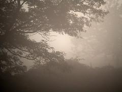 Nebel (skloi) Tags: nebel herbst bume morgen