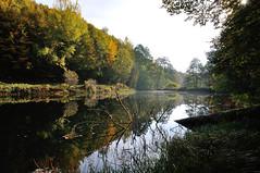 Un petit tang dans un bois (Excalibur67) Tags: nature forest landscape nikon contemporary sigma paysage reflexion reflets eaux d90 tangs vosgesdunord forts 1770f284dcoshsmc