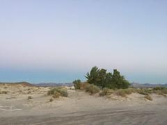 oasis in the desert (dana_sadow) Tags: california morning travel hot beautiful america sunrise landscape photography landscapes desert resort springs tecopa
