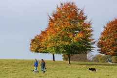 Autumn At Chatsworth Park, Derbyshire (Geraldine Curtis) Tags: autumn green gold cattle derbyshire families autumncolours ramblers chatsworthpark