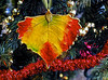Christmas Color (brucecarlson66) Tags: world christmas family light red holiday color tree green love beautiful yellow gold leaf soft peace hand wand magic decoration vincent wave norman more bead vein ribbon anticipation wish tradition excitement celebrate decorate behold softer peale