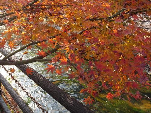 せせらぎ川の残り紅葉