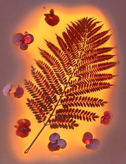 Primeval (Abhiks) Tags: red orange sun fern print leaf purple contest contact colourful sales lumen