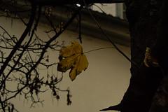 DSC_0055 (Alessandro_R_R) Tags: nature automne automn arbre feuille
