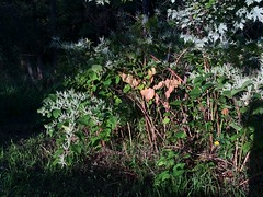 light on the weeds (neighsayers) Tags: weeds fenceline fence