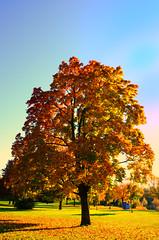 04 (florian.glechner) Tags: herbst bume pichlingersee bltter autumn oktober natur farben colors light licht herbstlandschaft farbe herbstfarben trees landscape landschaft see lake himmel heaven wiese grass