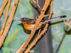 DSC_2124 ts (Photos by Kathy) Tags: cincinnatizoo animals zoo zoos nature kathymoore nikon2000 bird