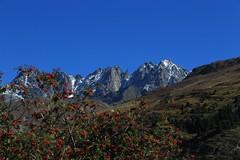 Grande Aiguille, col de l'Epe (bulbocode909) Tags: valais suisse bourgstpierre valdentremont grandeaiguille coldelpe montagnes nature arbres vert bleu rouge