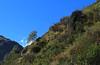 Bourg St-Bernard (bulbocode909) Tags: valais suisse bourgstbernard arbres nature montagnes vert bleu valdentremont