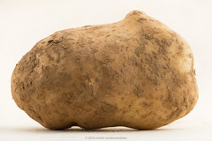 Unwashed potato. (annick vanderschelden) Tags: andes carbohydrate carotenoids cooking crop culinary dirty edible fiber food foodcrop foodsupply glycemicindex indigenous minerals naturalphenols nightshade perennial phytochemicals potassium potato resistantstarch skinon soil solanumtuberosum species starch starchy structure tuber tuberous unwashed vitaminc vitamis whitebackground whole