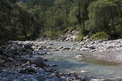 Abbraccio (lincerosso) Tags: torrentearzino valdarzinoalveo acqua acquacorrente bosco abbracciovegetale paesaggio landscape bellezza armonia