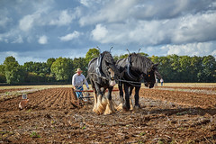 DSC05668 (Andy Oldster) Tags: eashing godalming farm plough ploughing heavyhorses shire sony alpha a65 slt