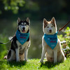 Huskies posing by the UEA Lake on the RSPCA BIG Walkies Norwich 2016 (Jonathan Casey) Tags: rspca big walkies earlham park norwich norfolk 2016 husky huskies lake nikon d810 200mm f2 vr
