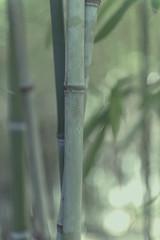Jardina Alfabia 00060 (Sebas Adrover) Tags: alfabia arquitectura baleares balearic balears espanya espaa illesbalears mallorca mediterranean mediterrani mediterrneo serradetramuntana spain tramuntana architecture bunyola finca garden historia jardn possesi islasbaleares es bambu