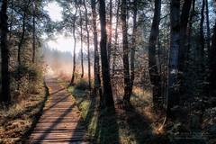 mystic way (Rainer Schund) Tags: mystic way mystery fog foggy wald forest sunshine sunrays lichtstimmung light licht lichterfest lichtstrahlen lightrays lichter weg steg